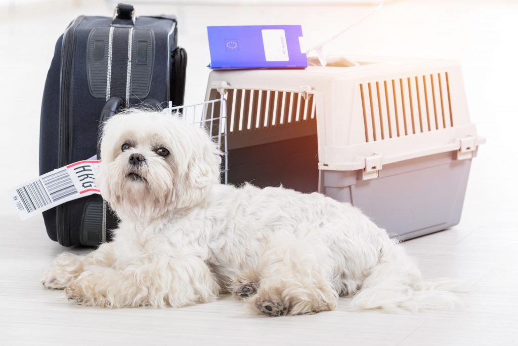 Live Animals for Cargo Personnel